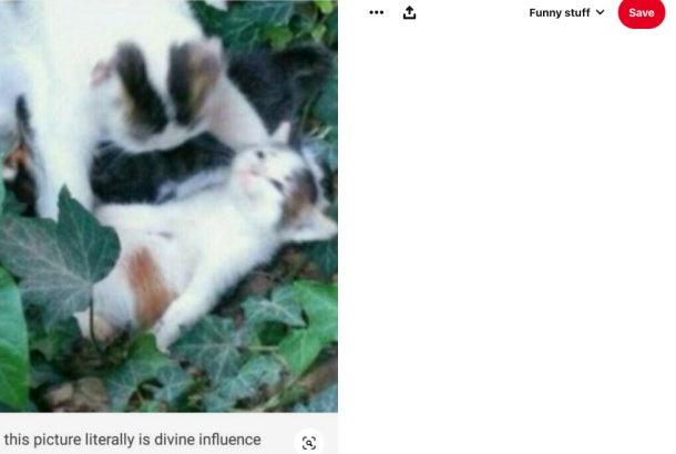 Brian Laundrie Pinterest - divine influence