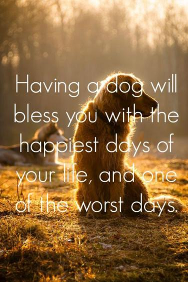 Quotes About Dogs Love Custom 48 Quotes That Prove Dogs Are TRULY WoMan's Best Friend YourTango