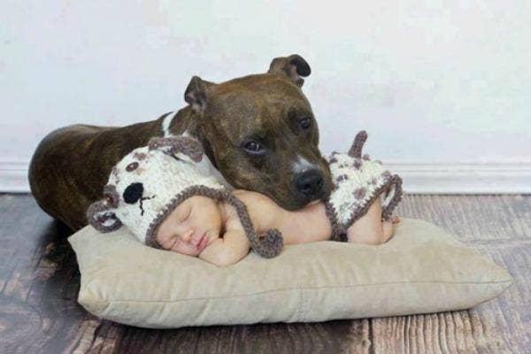 dog laying on sleeping baby