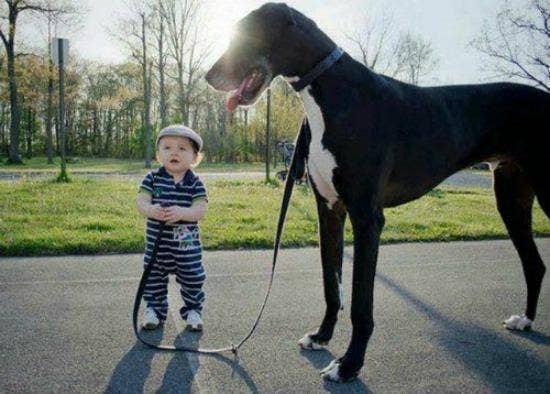 little kid with big dog