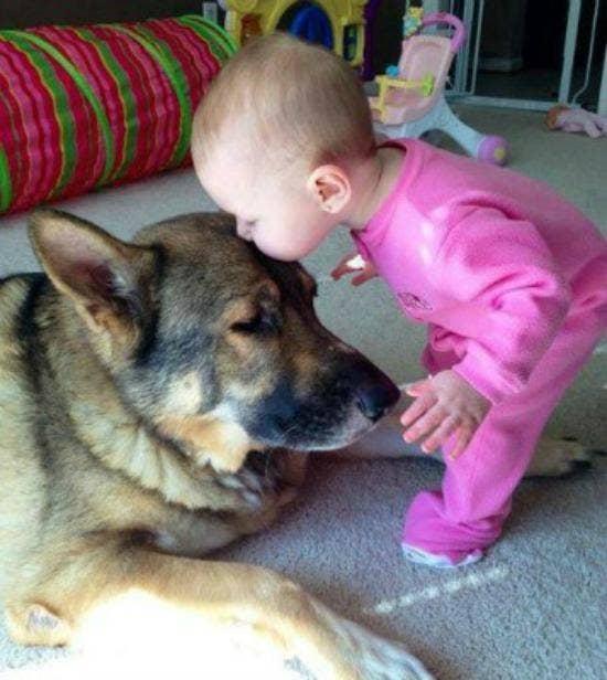 baby kissing dog