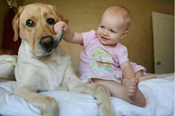 baby pulling dog's face