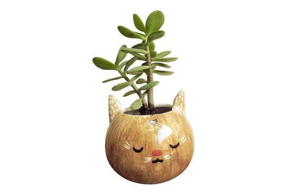 brown-cat-pot, cat-planter, cute-cat-planter, ceramic-cat