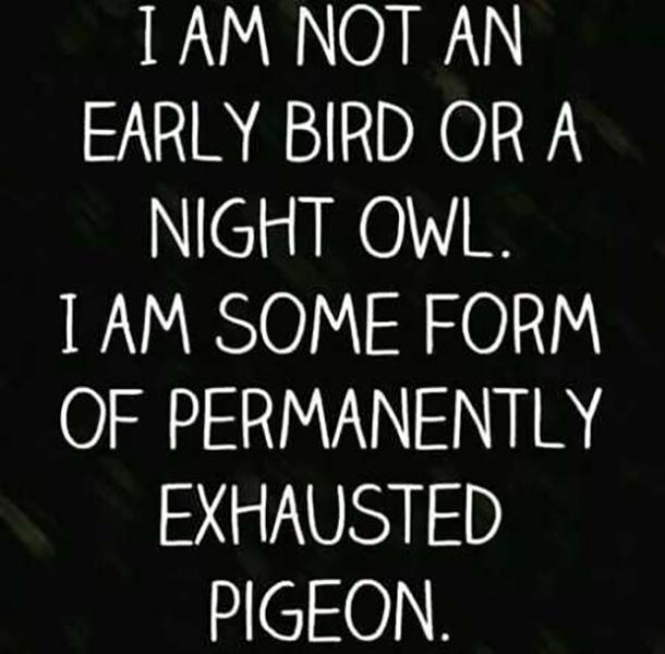 I am not an early bird or night owl. I am some form of permanently exhausted pigeon.