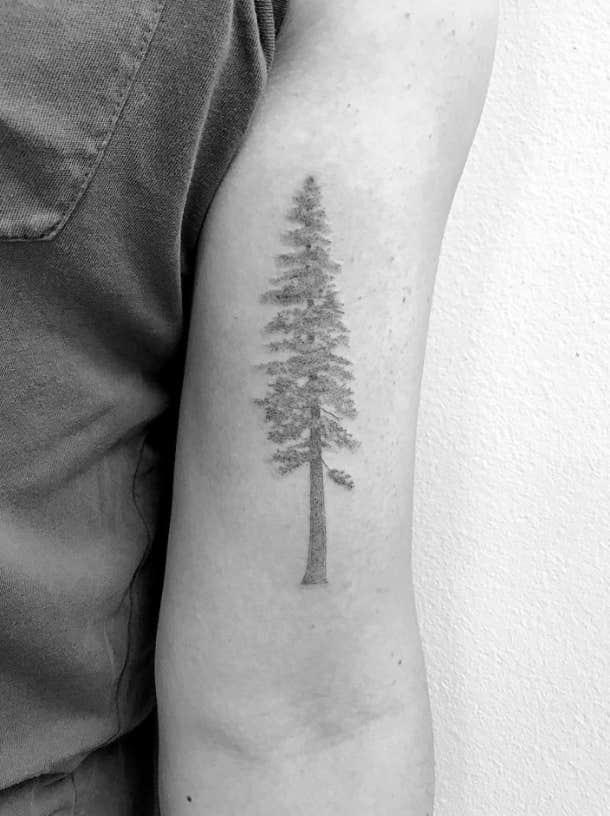 minimalist redwood tattoo