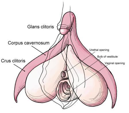 Experiment Using Your Vibrator On These Areas Instead Of Directly On Your Clitoris