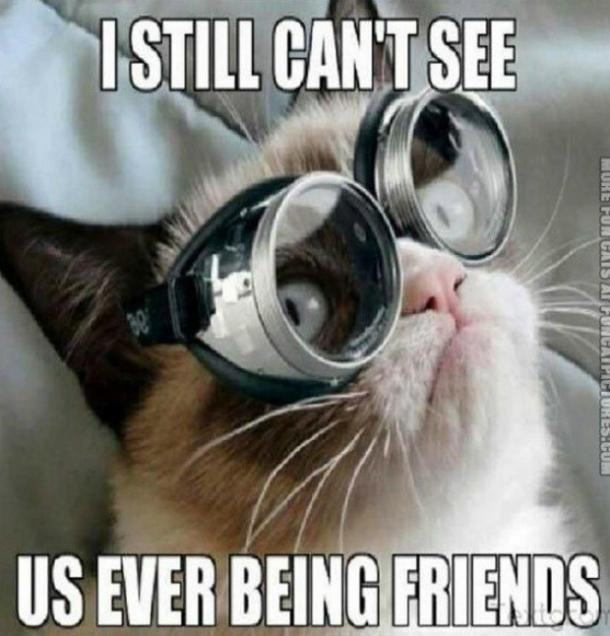 grumpycat5 21 best grumpy cat memes and funny quotes about love & life
