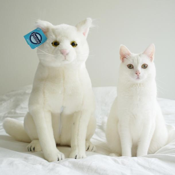 30 best gifts cat lovers are perfectly purrfect