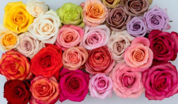 Quality Hot Pink Flirty 18 Socks Lovely Birthday Gift