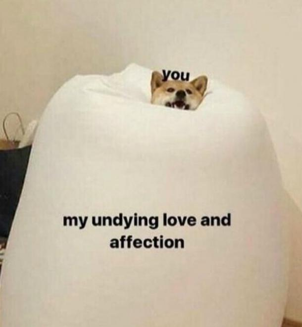 undying love and affection I love you meme