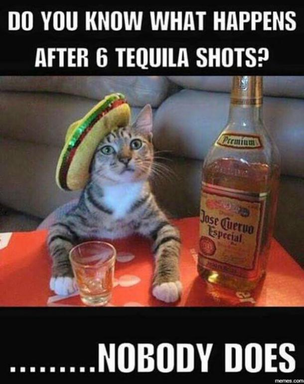National Tequila Day Tequila Memes Margarita Memes