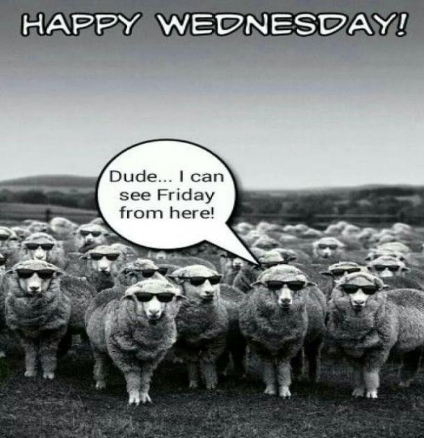 25 Best Funny Wednesday Memes & Hump Day Quotes To Get You ...