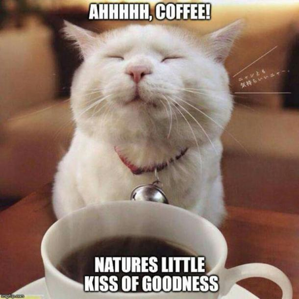 100 Funny Coffee Memes Any Caffeine Addict Can Relate To | YourTango