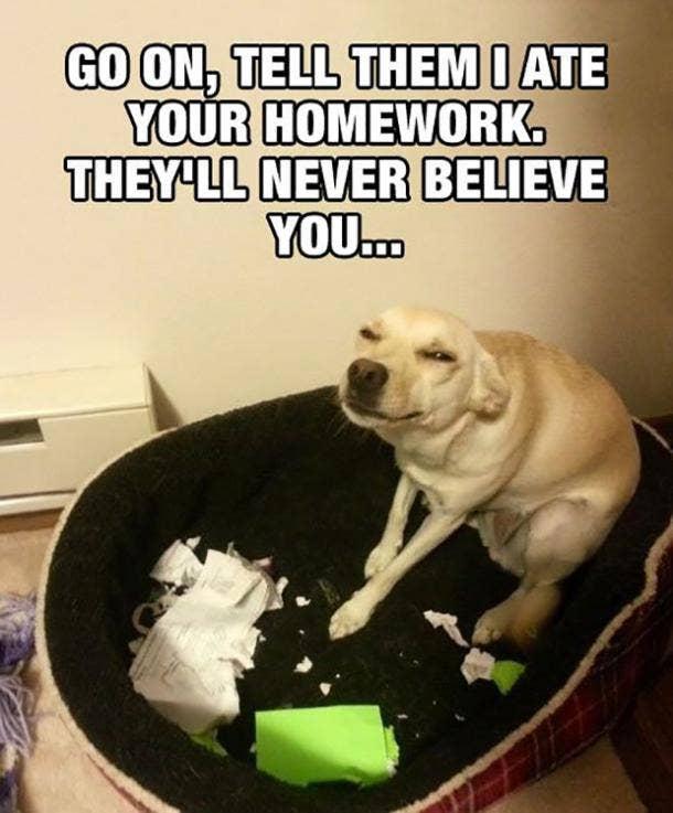 national dog day meme