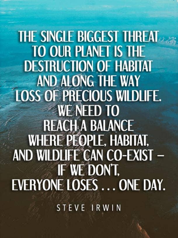 Steve Irwin environment quotes