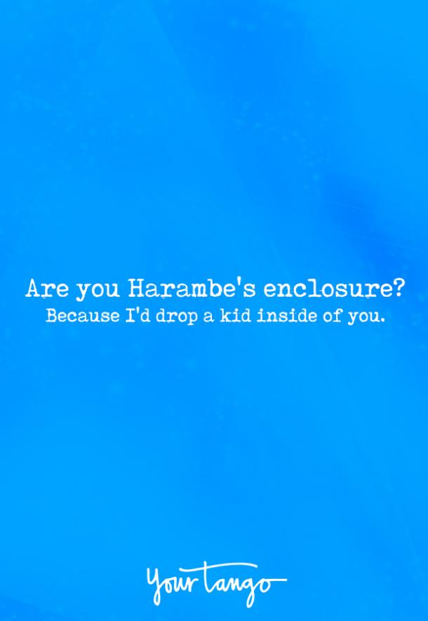 Are you Harambe's enclosure? Because I'd drop a kid inside of you.