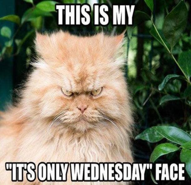 wednesday meme