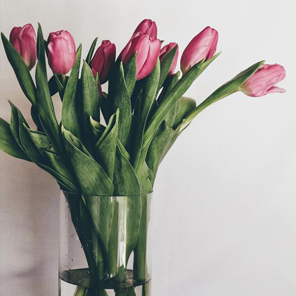 what do tulips symbolize tulips flower meanings