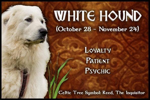 White Hound