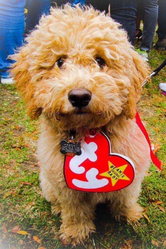 beanie baby dog costume