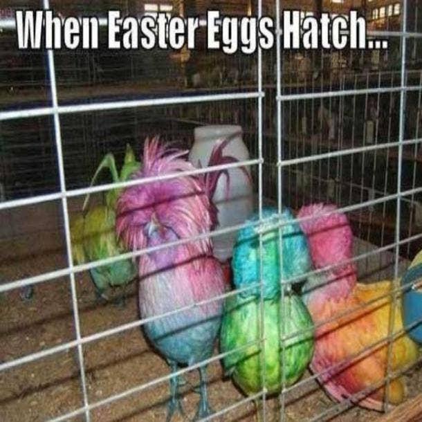easter memes when easter eggs hatch