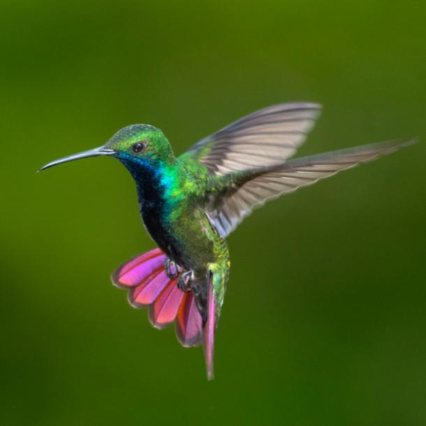 hummingbird bird meanings
