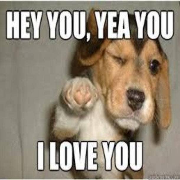 love meme puppy