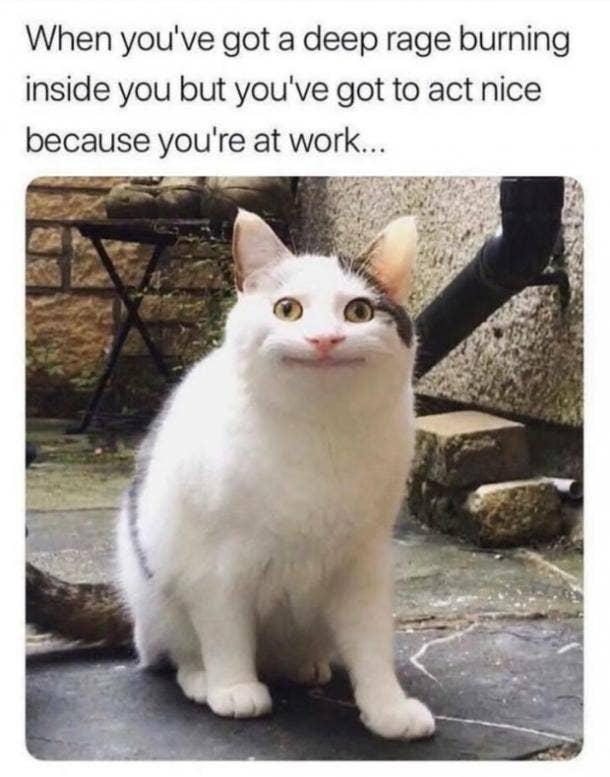 monday memes rage cat