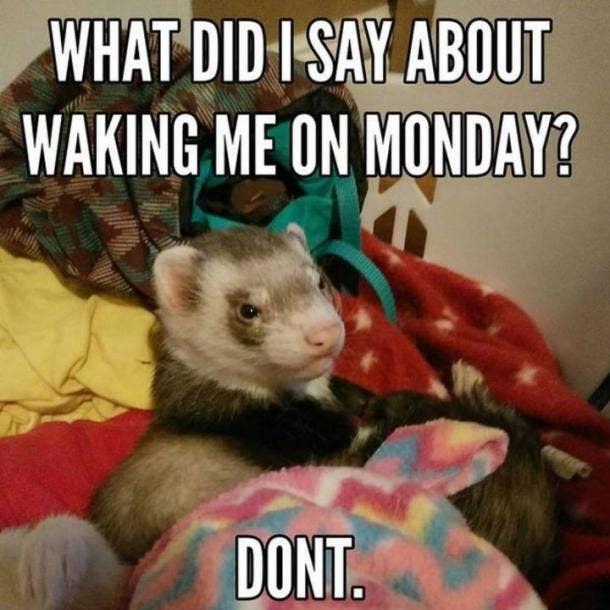 monday memes no waking me on monday