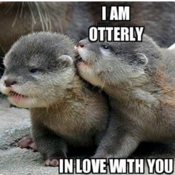 otter I love you meme