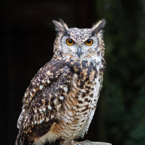 owl bird meanings