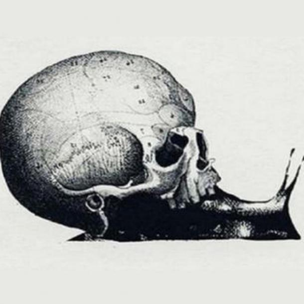 personality test what career path choose optical illusion snail skull