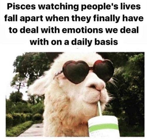 Best Pisces Memes