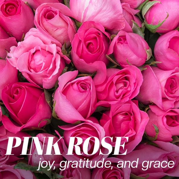pink roses color meaning