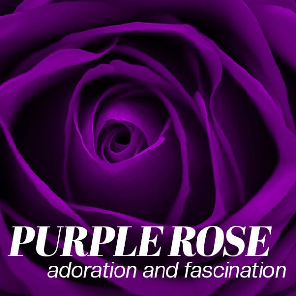 purple rose color meaning
