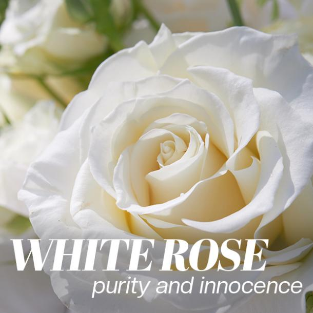 white rose color meaning