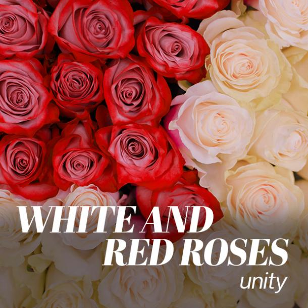 white and red roses color meaning