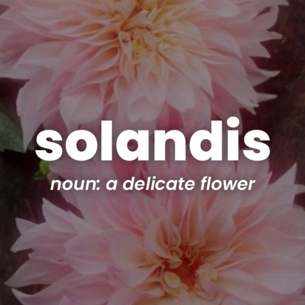 solandis rare words with beautiful meanings