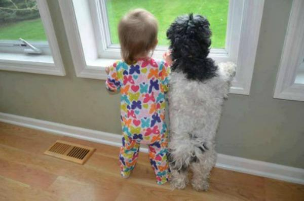 baby and dog standing at window