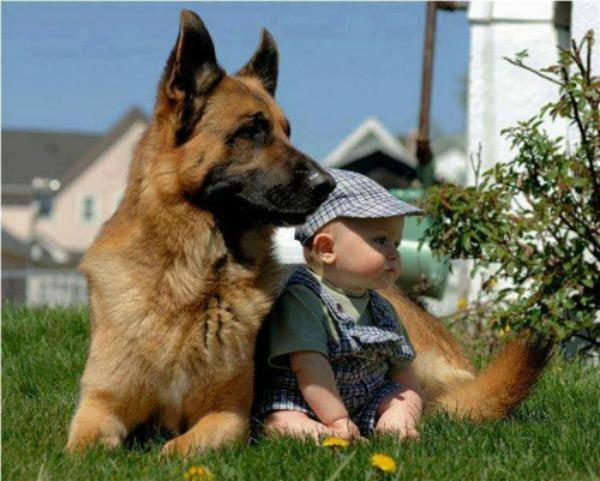 dog and baby outside