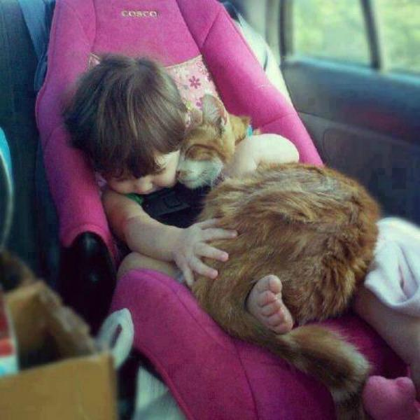 baby and cat in car