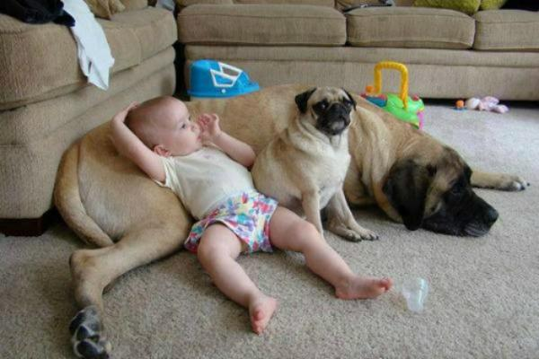dog's puppy and baby relaxing