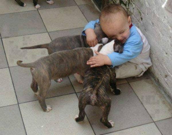 baby hugging puppies