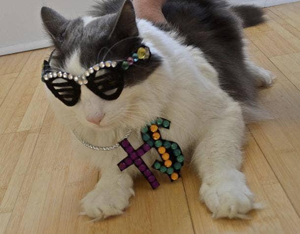 Cute Cat Halloween Costume