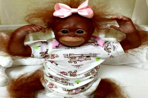 Monkey baby with pink bow.