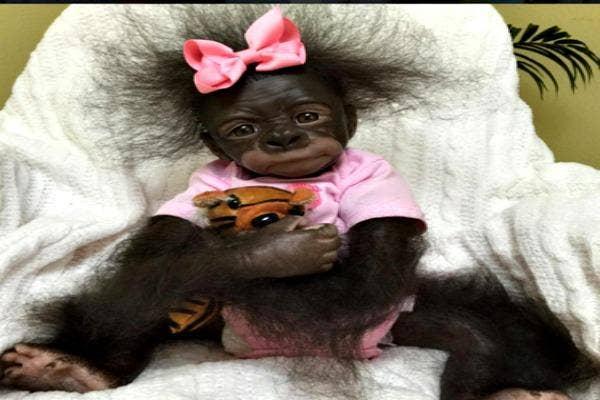 Monkey baby one.