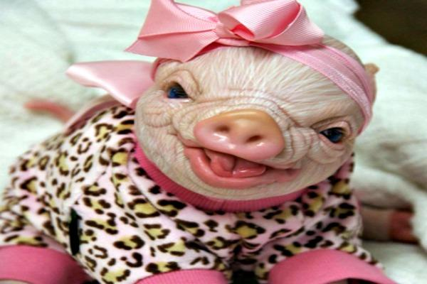 Pink pig baby with leopard print.