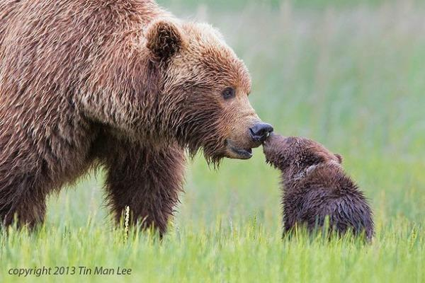25 Of The SWEETEST And Most Adorable Animal Parenting Moments