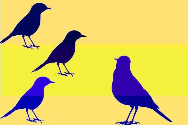 Blue Manakins have wingmen.