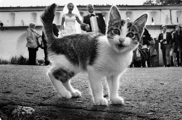 10 Jealous Cats